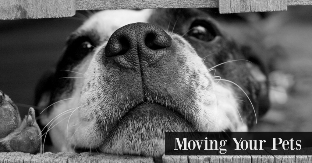 Moving Your Pets